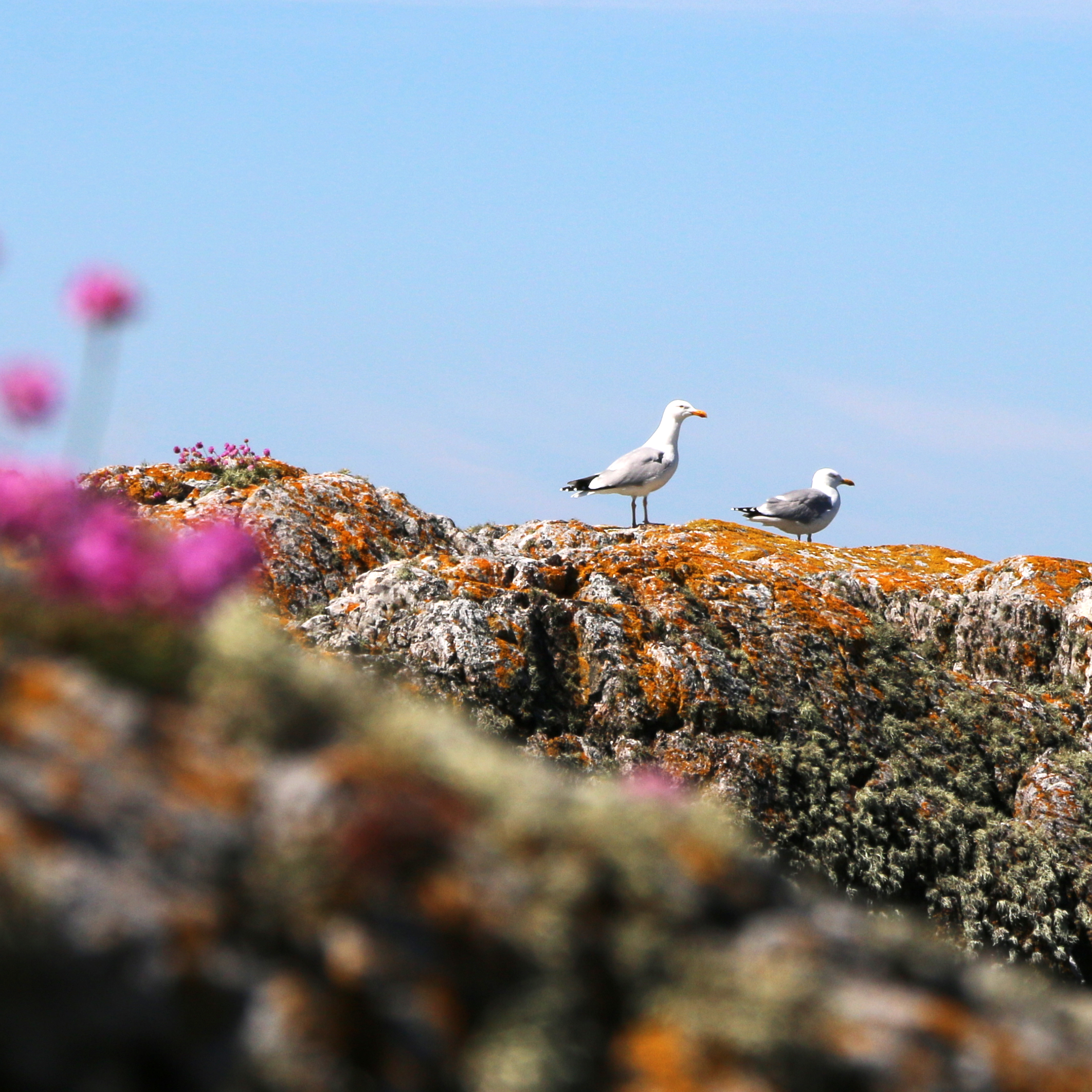 Wildlife, Isle of Coll